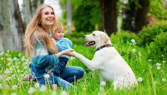 Consejos y trucos para el entrenamiento del perro de la familia