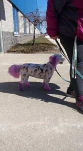 Qué`s It Like to Be a Professional Dog Groomer