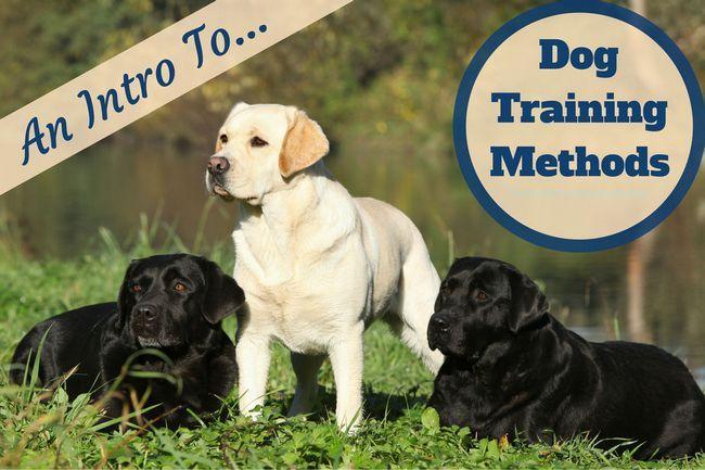 métodos de entrenamiento del perro: Un laboratorio de color amarillo y 2 negros en la hierba por el agua