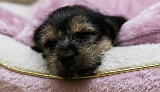 Es una noche cachorro luz una ayuda eficaz del sueño?
