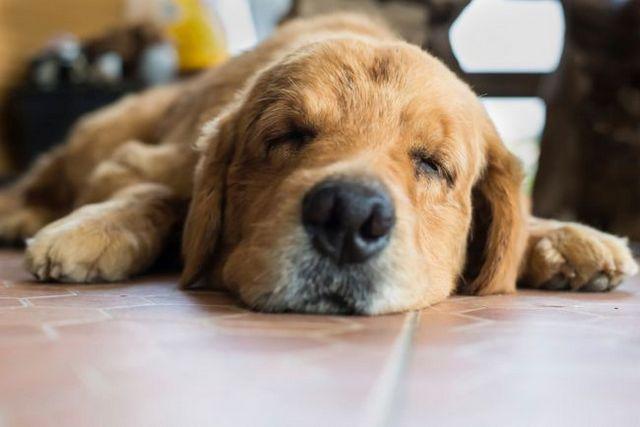 Es mi perro teniendo una convulsión?