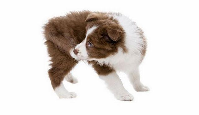 ¿Su perro muerde la cola? Las razones para que saborees