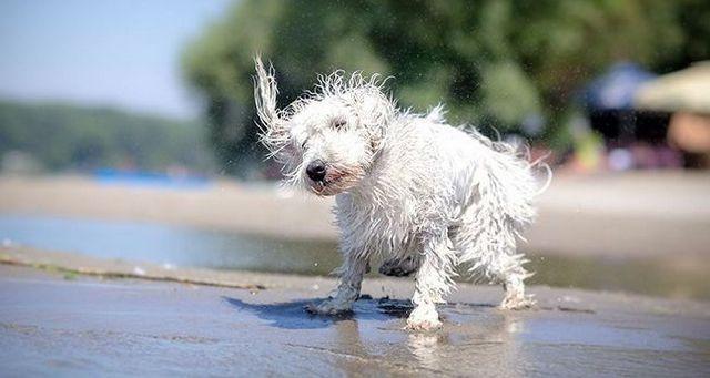 Mantenga a su perro seguro en el verano