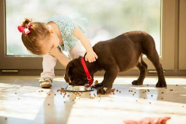 Mantener los perros y los niños seguros en conjunto