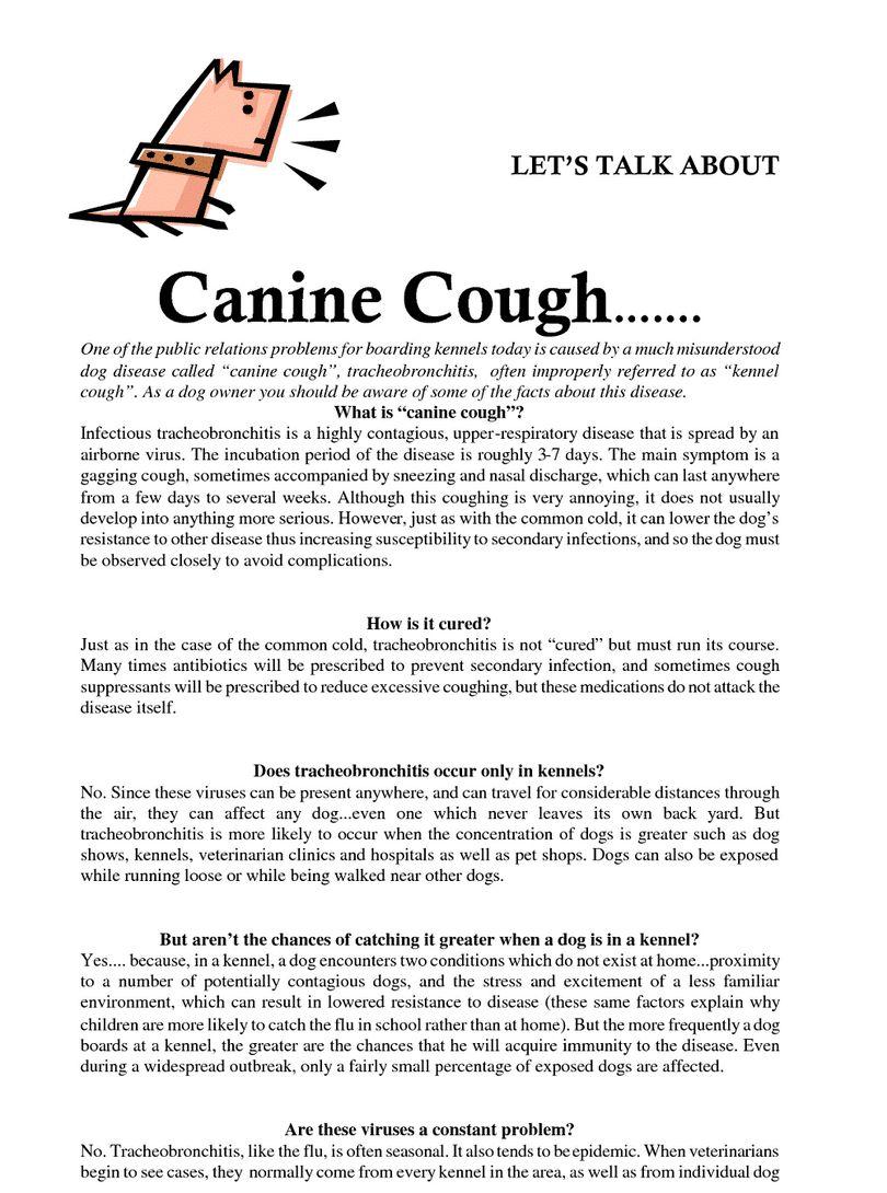 Tos de las perreras en perros: symptômes, causas y tratamiento