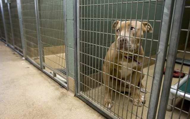 Ley dice que los animales vendidos en Phoenix Tiendas de mascotas deben venir de refugios y rescates