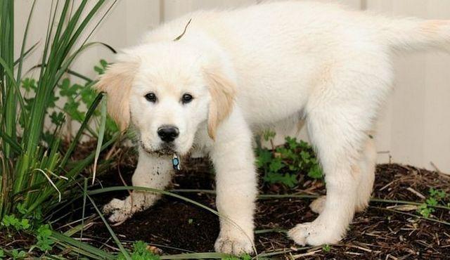 La protección del césped: cómo detener un perro de la excavación