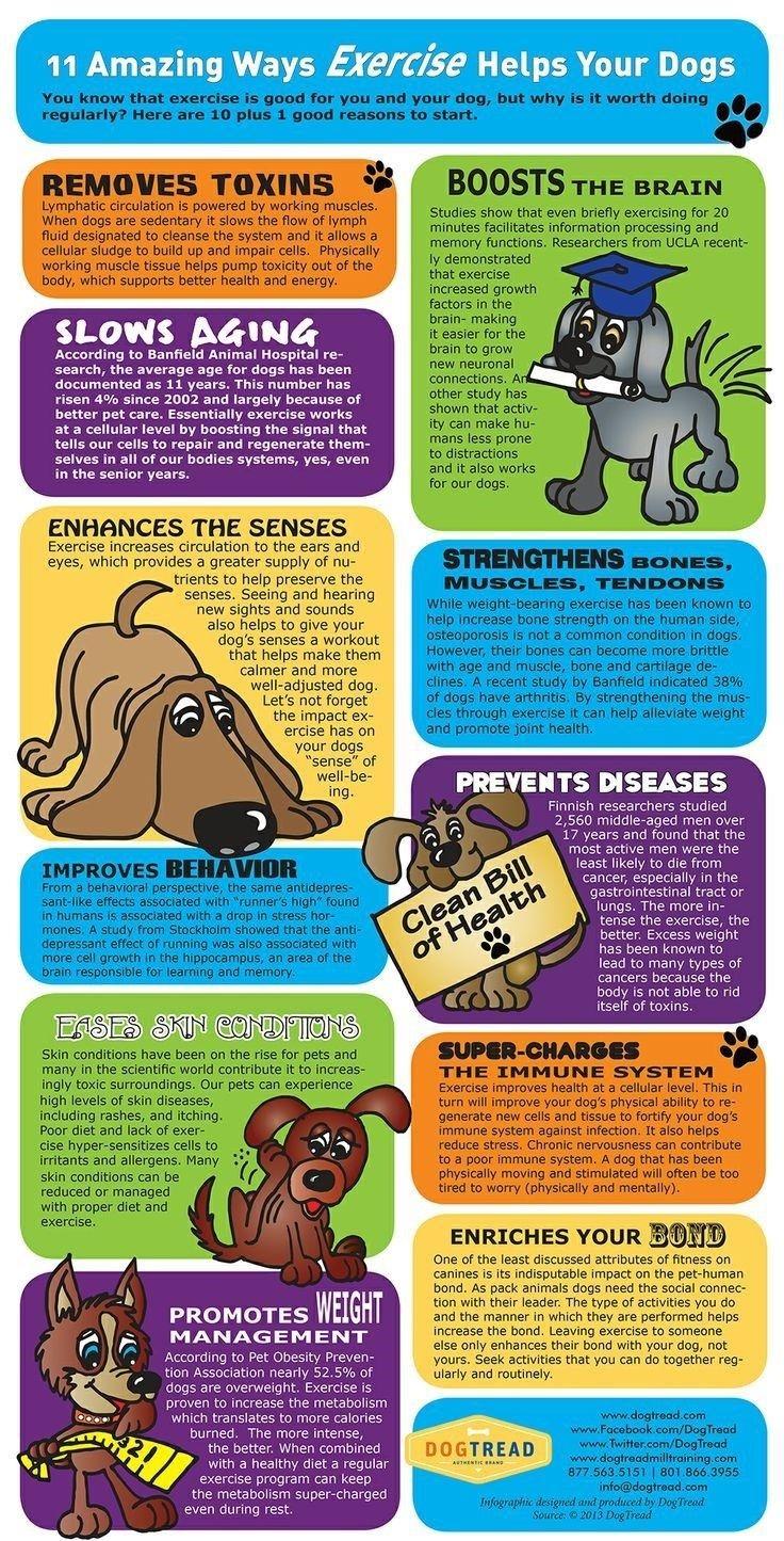 beneficios del ejercicio del perrito