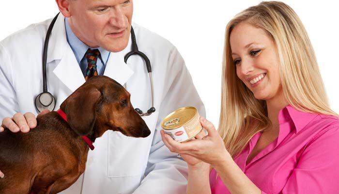 Alimentos en latas perro - Tipos de alimentos para perros