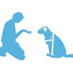 Consejos para ahorrar dinero en las facturas del veterinario