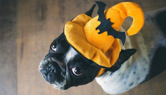 Peligros de Halloween para perros