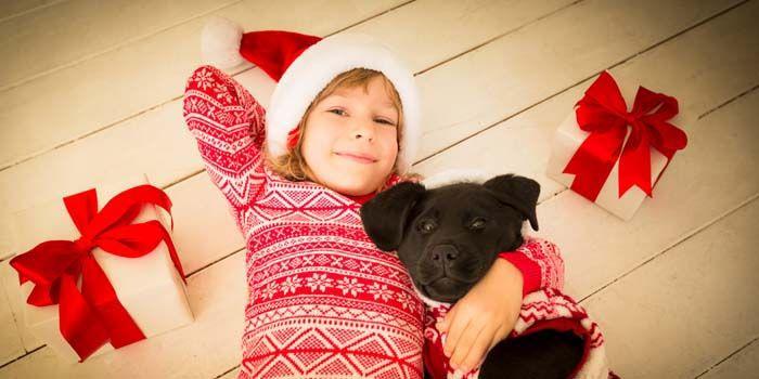 Гљltima Hora Navidad DIY Regalos para los amantes del perro