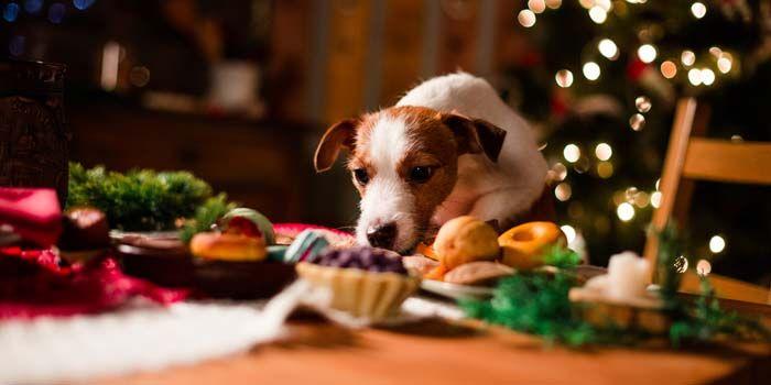 DIY hechos en casa golosinas para perros para la Navidad