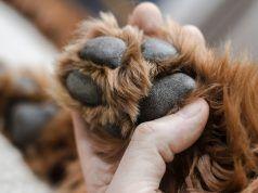 Cómo quitar el pelo de las patas del perro