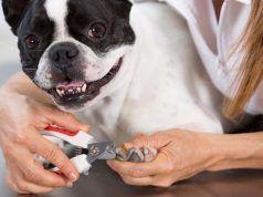 CГіmo entrenar a un perro a disfrutar y estГ©tica y mantener la calma Cuando Groomed