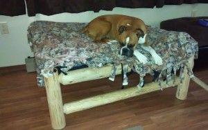 Cría de Perros Responsable