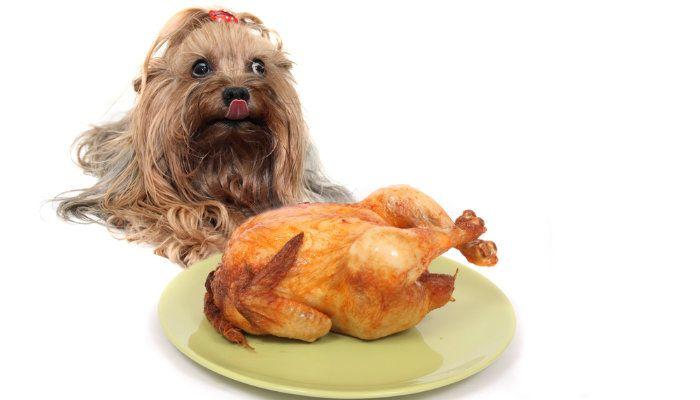 cena de pavo de acciГіn de gracias come perro