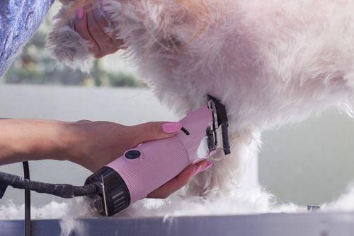 afeitar su perro para el verano
