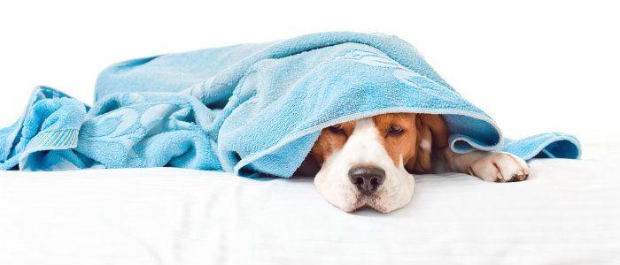 Los costos ocultos de la propiedad del perro