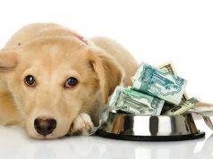 Perro Material Costo No vale la pena