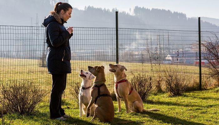 voluntario para ayudar a los perros