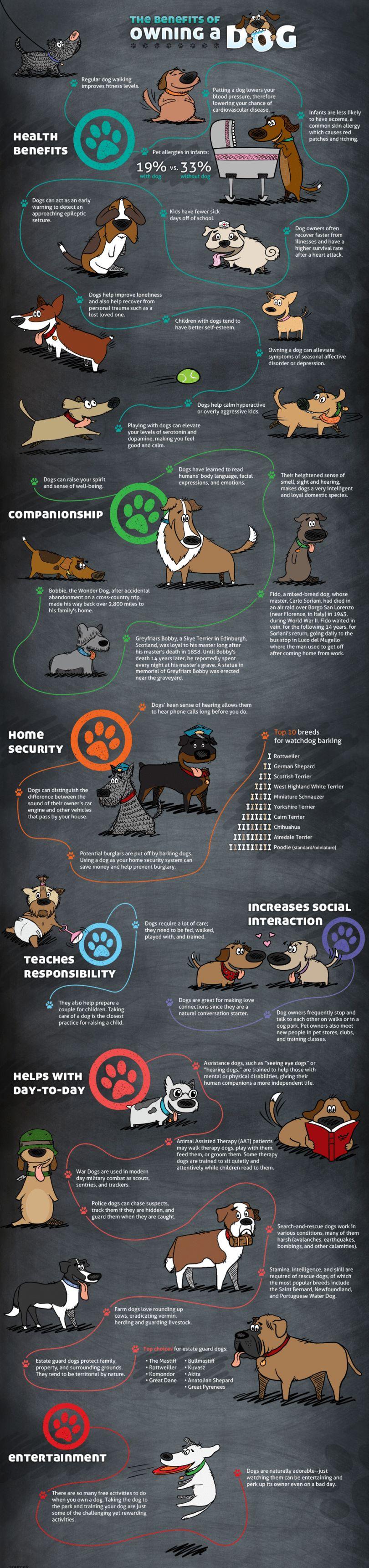 Ciclo de vida de un perro: un enfoque a fondo de la