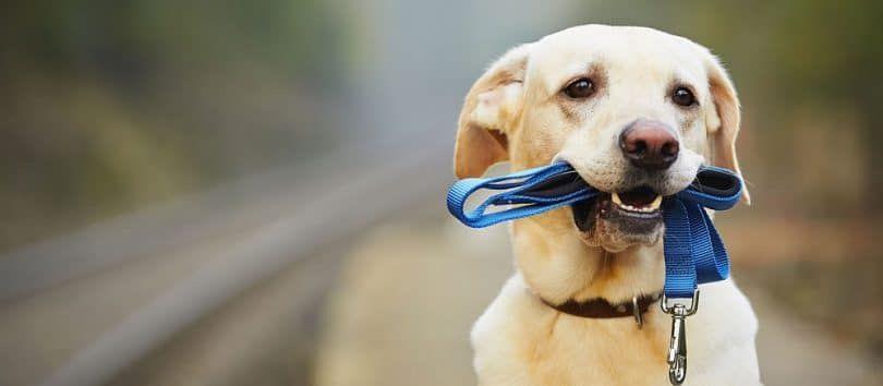 disciplina del perro