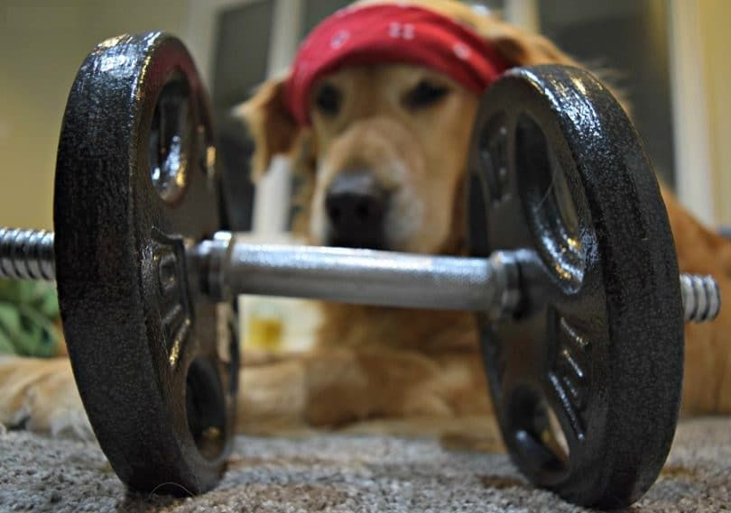 La dieta y el ejercicio