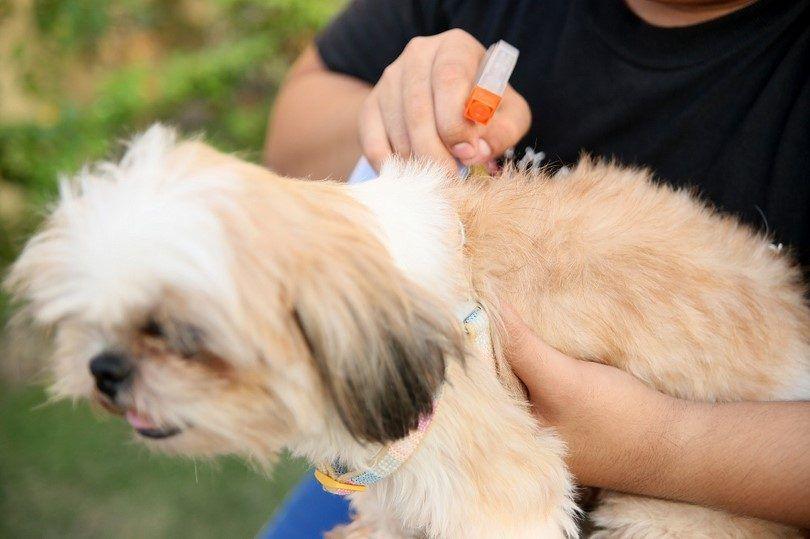 Lista de los mejores remedios naturales para calmar las reacciones alérgicas de su perro