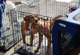 Dos perros de color marrГіn en una perrera.