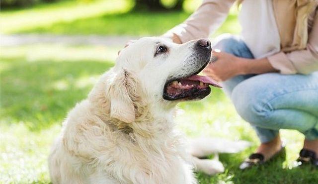 ¿Quiere comprar un perro? Grandes preguntas acerca de los perros respondieron