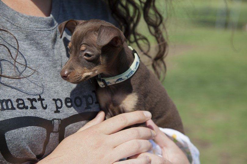 Perro con el collar de la etiqueta