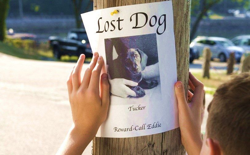Cartel de un perro perdido