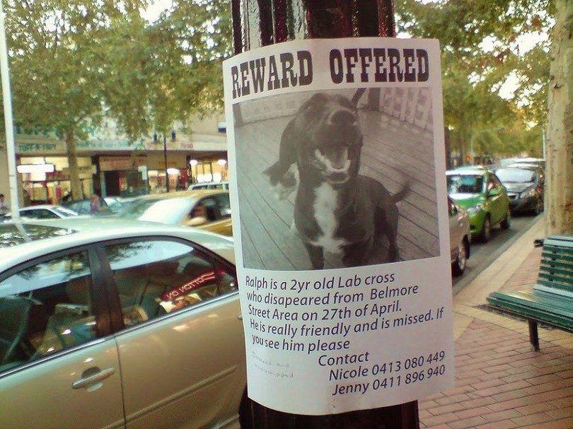 cartel del perro perdido