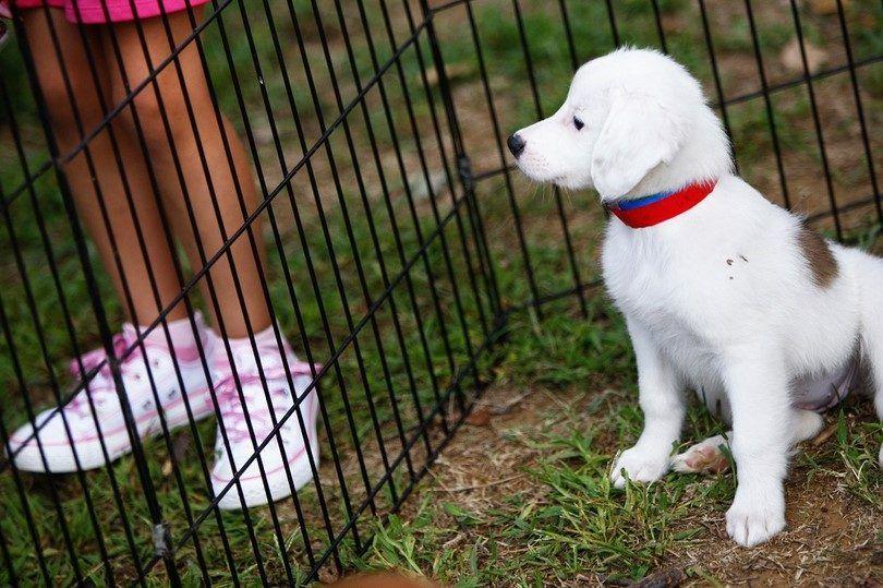 perro pegado
