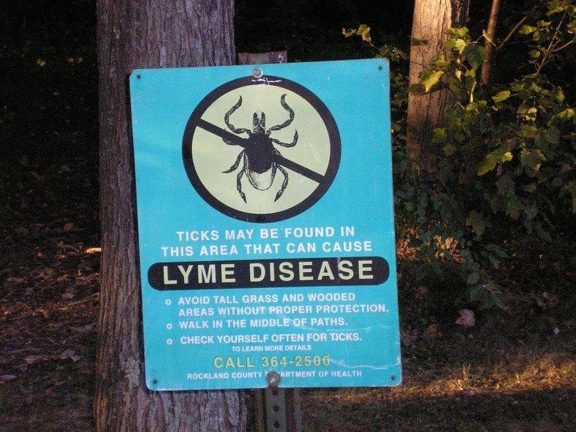 La enfermedad de Lyme en la madera
