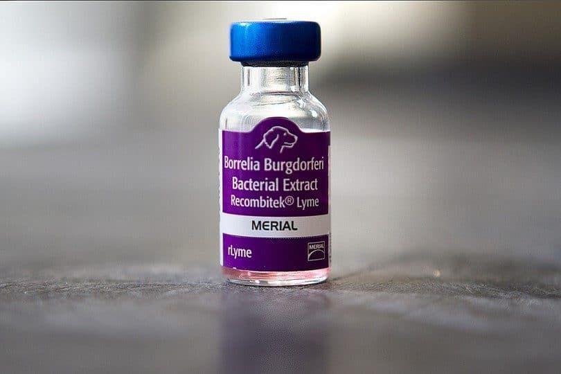 vacuna de Lyme para perros