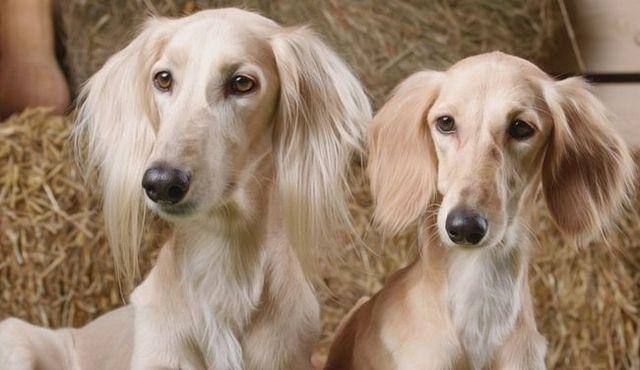 Hombre vs mujer con perros: ¿hay una diferencia (aparte de lo obvio)?