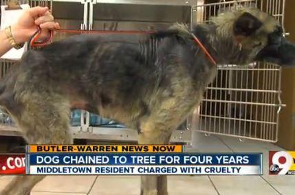 Hombre abusa de perro por 4 años, recibe $ 25 fina