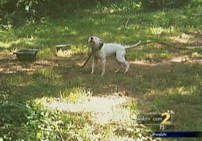 El hombre detenido tras el rescate de perro dependiente en un día caluroso