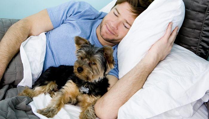 El hombre se niega a hacer servicio comunitario después de morder su perro
