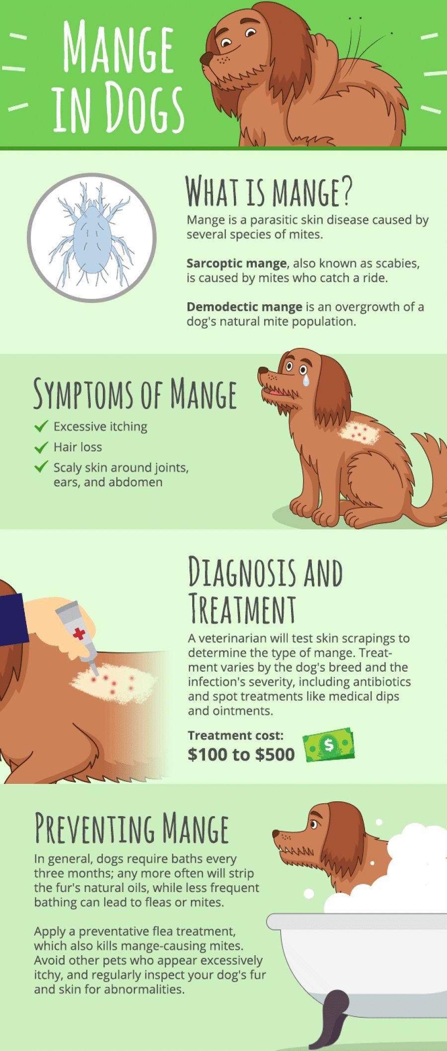Sarna en perros: todo lo que necesita saber sobre él