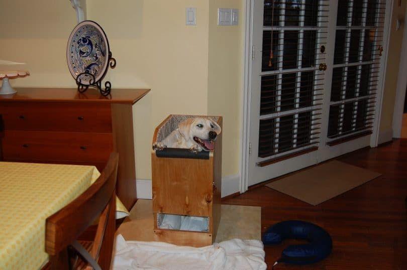 Bailey silla para perros