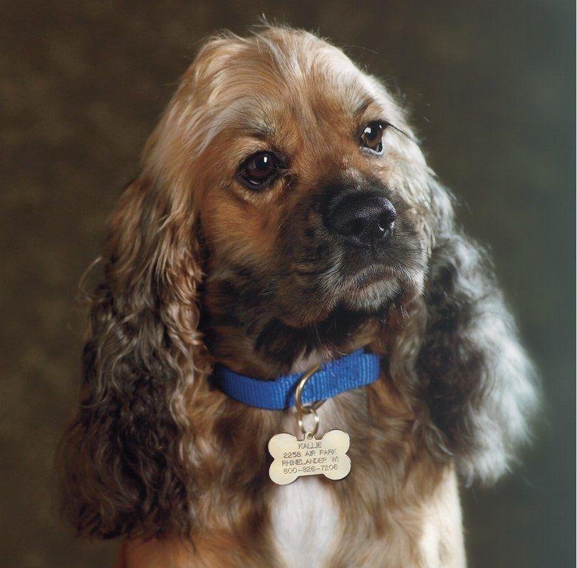 Collar de perro etiqueta