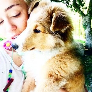 Miley cyrus adopta otro cachorro