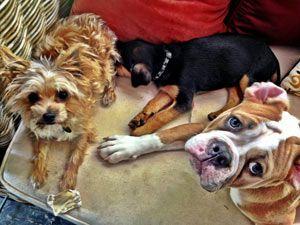 Miley cyrus y su amor por los perros
