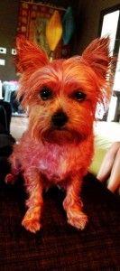 Miley cyrus celebra el 2do cumpleaños de lila - por tiñéndose de color rosa!
