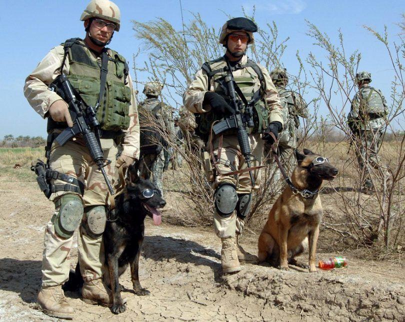 perros en héroe militar