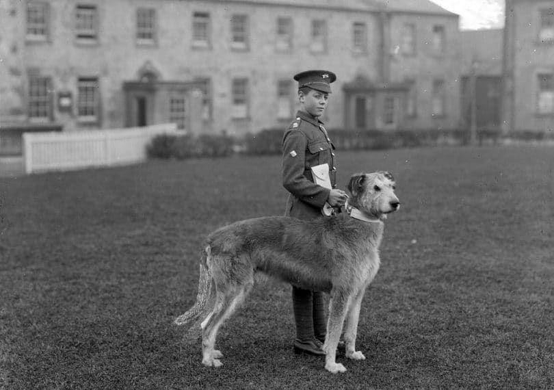 Terrier irlandés en el servicio militar