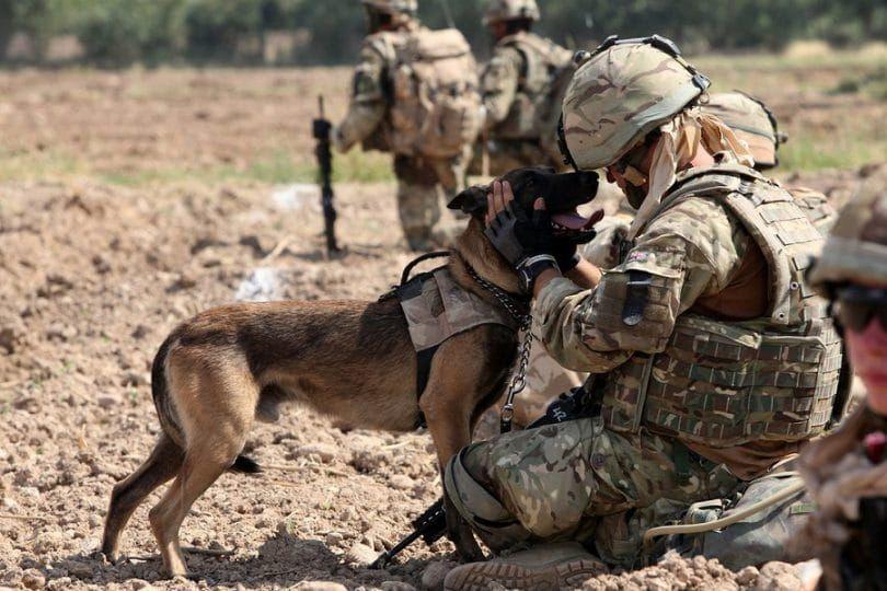 el perro militar